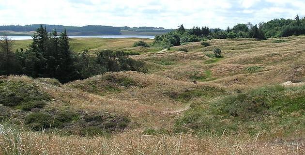 The grassy dunes in Thy National Park in northwestern Jutland (photo: Jensbn)