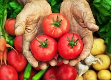 Tomatoes are leaving the potatoes behind (photo: iStock)