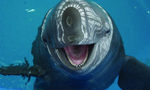 A world without porpoise: the killings that made us blubber