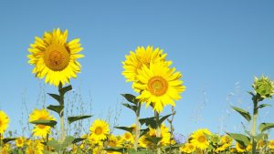 Danish News in Brief: Record summer to keep on giving