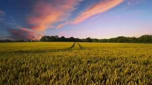 Over a tenth of Danish agricultural land now organic